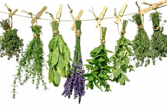 An Introduction to Herbs 1