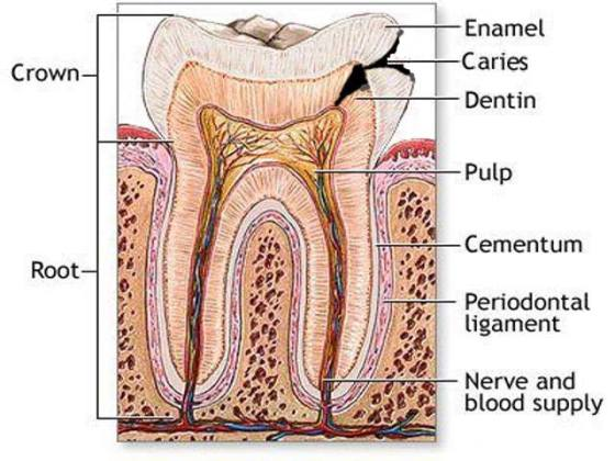 How to Get Rid of a Toothache Naturally 2