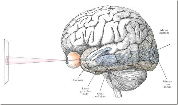 relationship between consciousness and awareness